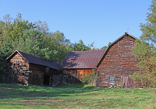 Barn with Vines #4