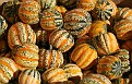 Nothing but Gourds