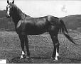GAZYL #2820 (*Zarife x Gutne) 1944 chestnut stallion bred by Wayne Van Vleet/ Van Vleet Arabian Stud