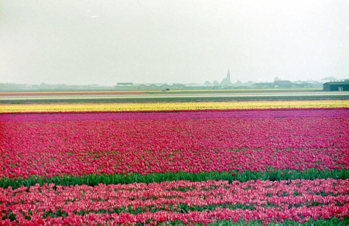 Keukenhof 2000 April 5 (38)