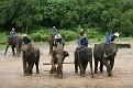Mae Taeng Elephant Park Show (3)