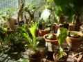Greenhouse (14 nov 03)