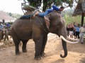 Mae Ping Elephant Camp near Chiang Mai in Northern Thailand Day 12 Feb 23-2006 (102)
