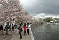 Cherry Blossom Fest 2013 063
