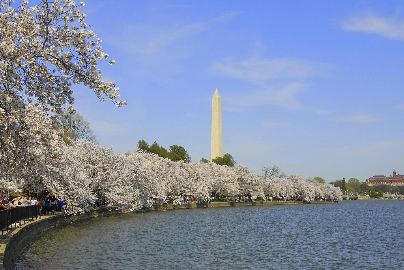 Cherry Blossom Fest 2014 091