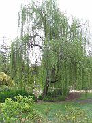 Descano Gardens24