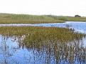 Everglades Tour03