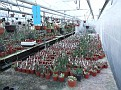 02 Stapliad plants