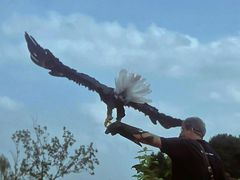 Falkner mit Weißkopfseeadler