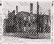 Picture copied from The Knoxville News-Sentinel Jan  6,1947 issue