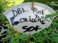 Plants Names DX7 163