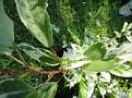 Plants Names DX7 208