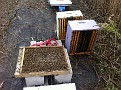 Back to Straightening out the mess at  the Natali Vineyard hives...