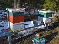 Christmas Week 2009 / Winterizing my Honey Bee Hives.