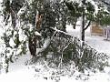 Snowstorm 2-6-2010 (10)