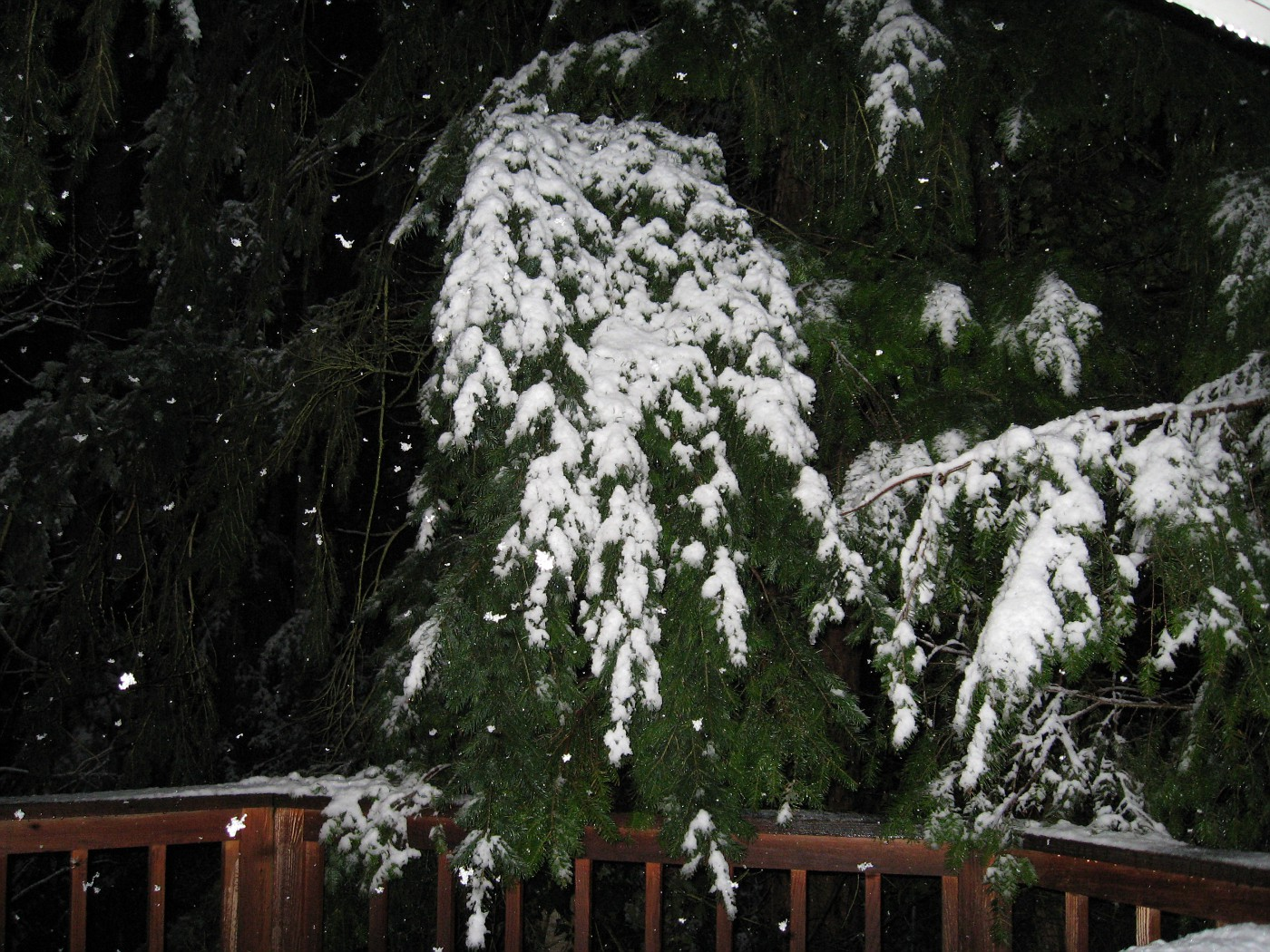Sammamish, Wa, March 29, 2008