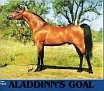 ALADDINNS GOAL #256431 (*Aladdinn x *Finisia, by Abu Ali) 1981 bay stallion bred by Kenneth & Peggy Johnson