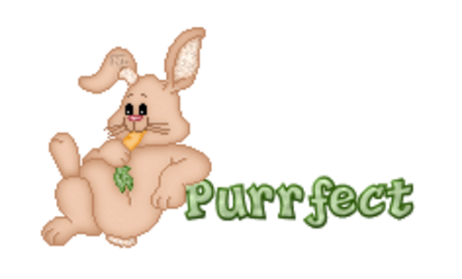 Purrfect - BunnyWithCarrot