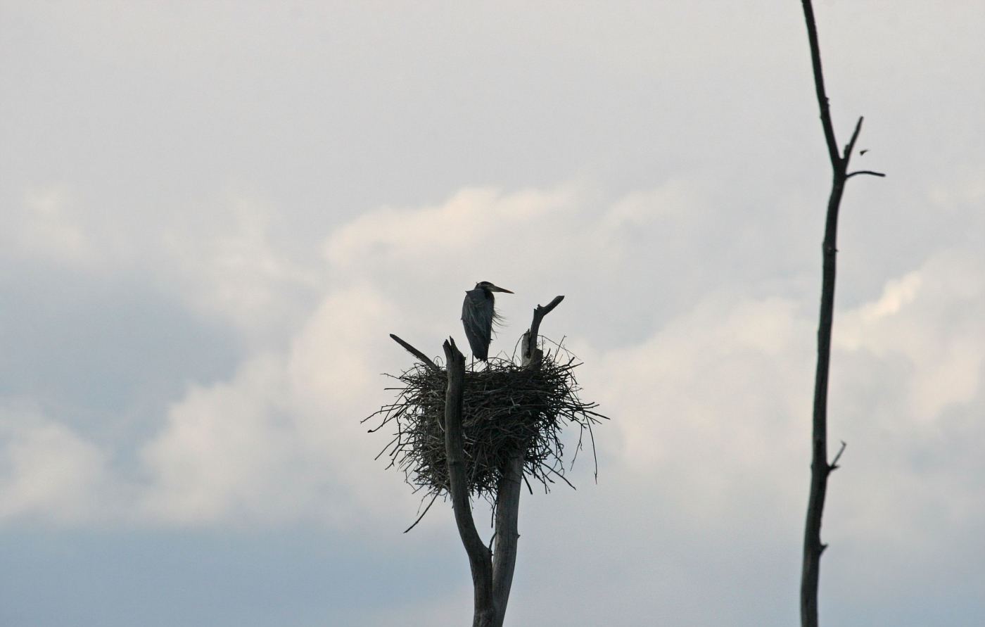 View From the Nest