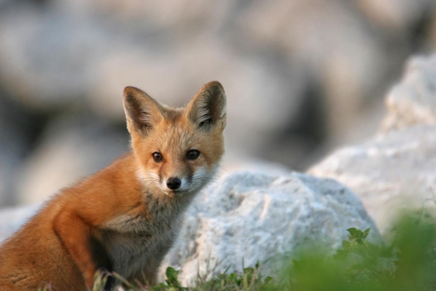 May Fox Series #3