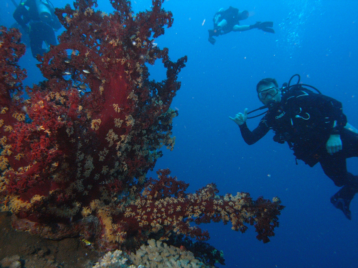 Scott and HUGE soft coral