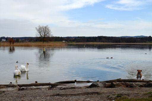Hike around Greifensee Lake