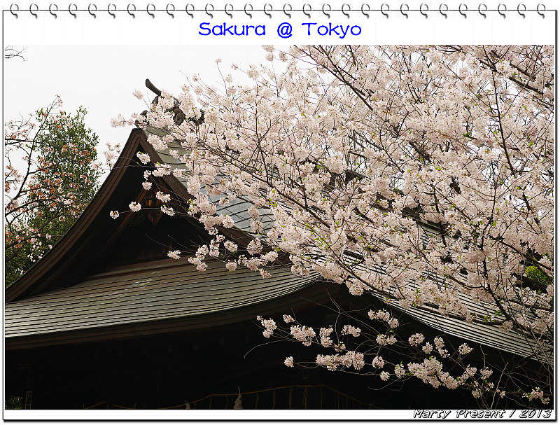 與櫻花相遇在東京