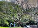 Brisbane Botanic Gardens 015