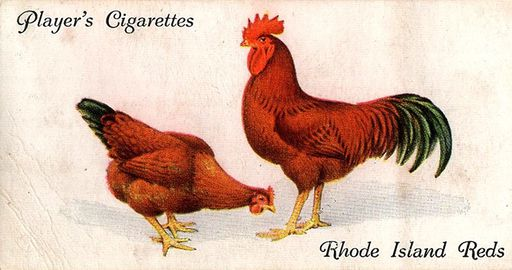 1931 Player's Poultry #38 (1)