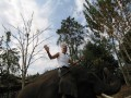 Mae Ping Elephant Camp near Chiang Mai in Northern Thailand Day 12 Feb 23-2006 (112)