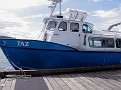 Taz whalewatching boat