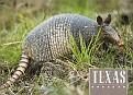 07- TX State Animal