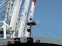 NYK VENUS Port 2000 Le Havre 20120528 017