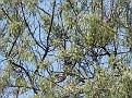 Bird Bredene 20120527 005