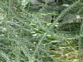 Vystava kaktusu 2005 (6)