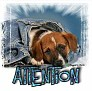 1Attention-blujeanpup