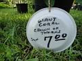 Plants Names DX7 146