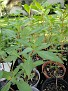 Plants Names DX7 186