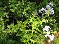 Plants Names DX7 194