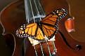 Butterfly on Strings 1