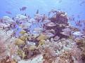 Grand_Cayman-23.jpg