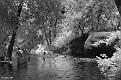 Creek Swim