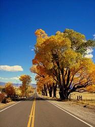 Autumns Bliss