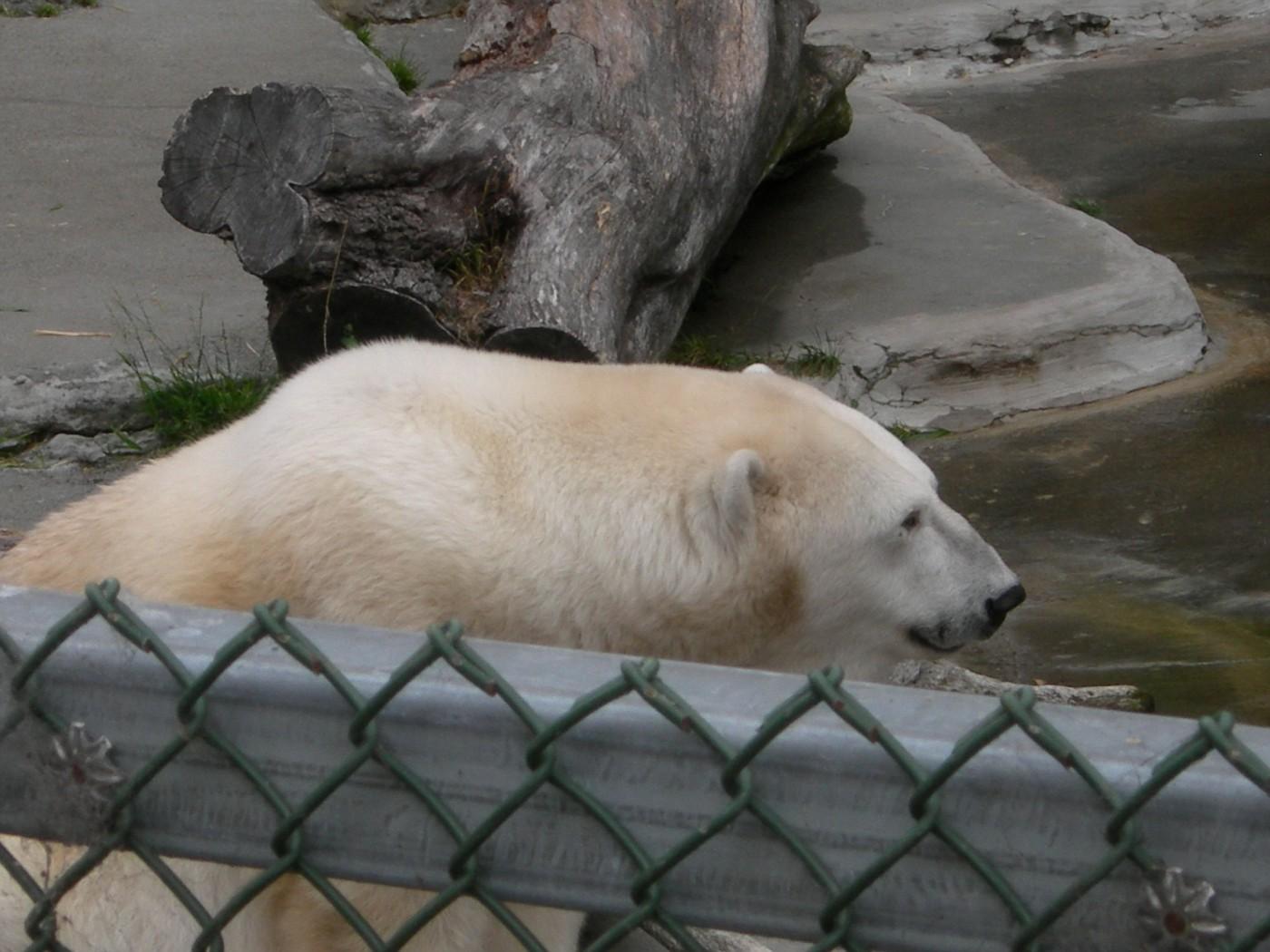 SF zoo 13