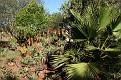 Ivydale Garden Polokwane (5)