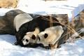 070216 Natl Zoo333