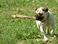 20070513 - Westport Dogs - 04-sm
