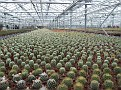 085. the bigest nursery in the area