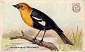 1918 Useful Birds of America Second Series #23 (1)