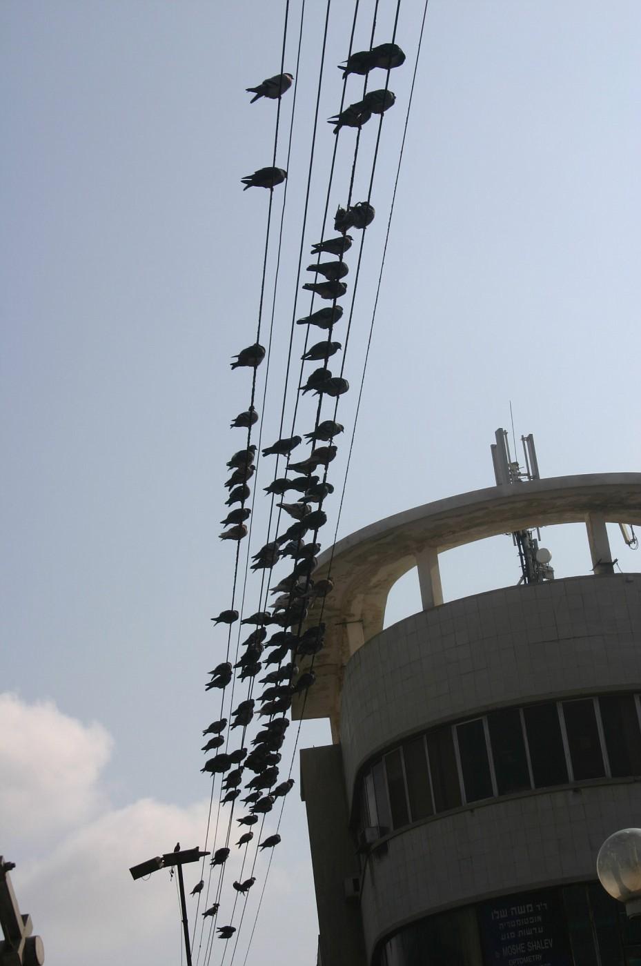 tel-aviv-birds